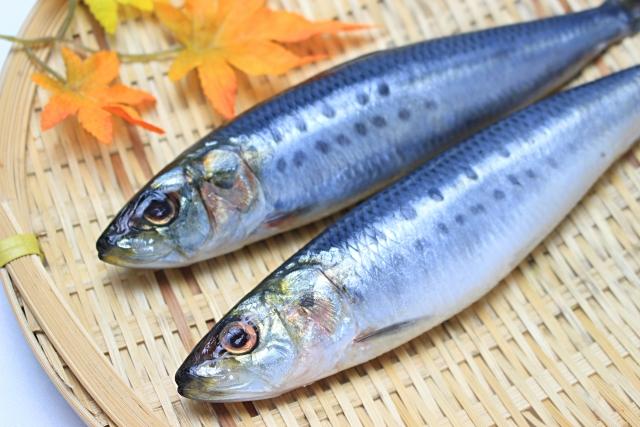 DHA・EPA(青魚)の摂取不足