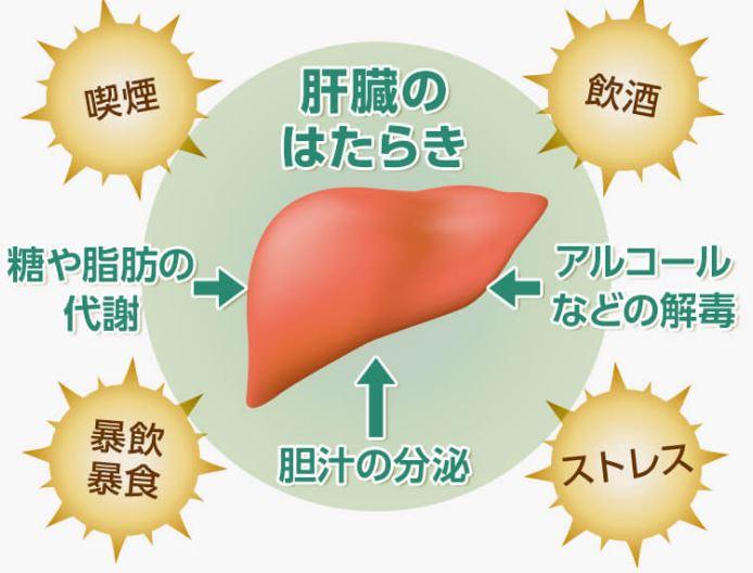 セラクルミンの改善効果