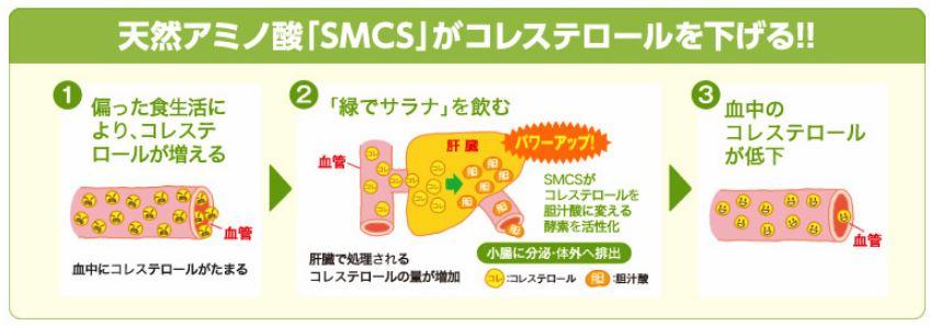 SMCSとコレステロール