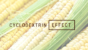 シクロデキストリンって何?7つの効果・エビデンス・配合サプリメント